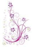 Girasoles, verano Imagen de archivo