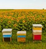 Girasoles y abejas imágenes de archivo libres de regalías