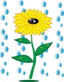 Girasoles y gotas de lluvia en aislado Libre Illustration