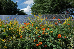 Girasoles y los paneles solares foto de archivo