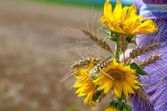 Girasoles y ramo del trigo Imagen de archivo libre de regalías