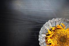 girasoli asciutti decorativi su una tavola di legno nera Immagini Stock Libere da Diritti