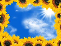 Girasoli contro cielo blu Fotografia Stock Libera da Diritti