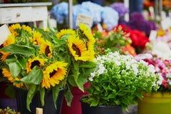 Girasoli da vendere sul mercato locale del fiore Immagini Stock
