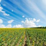 Girasoli e cielo nuvoloso Immagini Stock Libere da Diritti