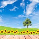 Girasoli ed albero sul campo di erba verde con cielo blu e legno Immagine Stock Libera da Diritti