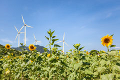 Girasoli ed energia eolica Fotografia Stock