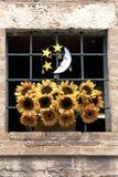 Girasoli in finestra, Italia Fotografia Stock