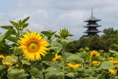 Girasoli in fioritura con la pagoda di legno Fotografia Stock