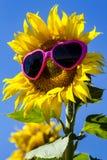 Girassóis amarelos com óculos de sol do coração Imagem de Stock Royalty Free