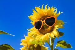 Girassóis amarelos com óculos de sol do coração Foto de Stock Royalty Free