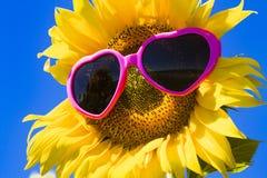 Girassóis amarelos com óculos de sol do coração Foto de Stock