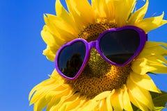 Girassóis amarelos com óculos de sol do coração Fotografia de Stock