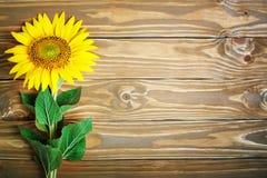 Girassóis bonitos em uma tabela de madeira Vista de acima Fundo com espaço da cópia Imagens de Stock Royalty Free