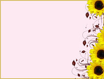 Girassóis de canto florais do projeto ilustração royalty free