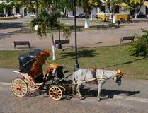 Girassóis do vagão do buckboard do cavalo da cidade do amarelo de Izamal Iucatão México imagem de stock royalty free