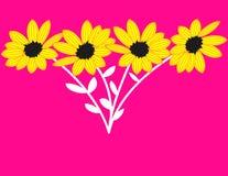 Girassóis no fundo cor-de-rosa Fotos de Stock Royalty Free