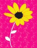 Girassol amarelo na flor ilustração royalty free