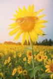 Girassol amarelo nos óculos de sol com céu azul, Tailândia Imagens de Stock Royalty Free
