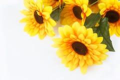 Girassol bonito Imagens de Stock