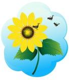 Girassol brilhante Imagem de Stock