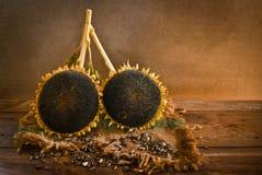 Girassol com sementes de girassol fotos de stock