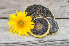 Girassol com sementes de girassol Imagem de Stock