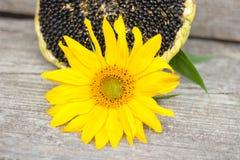 Girassol com sementes de girassol Fotografia de Stock Royalty Free