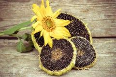 Girassol com sementes de girassol Fotos de Stock Royalty Free