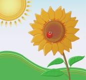 Girassol com um joaninha que enfrenta o sol Imagem de Stock Royalty Free
