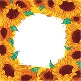 Girassol da flor do teste padrão do quadro ilustração stock