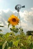 Girassol do moinho de vento Imagens de Stock