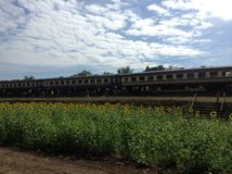 Girassol do trem Fotos de Stock Royalty Free
