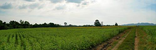 girassol do verde do panorama do scape da terra Fotografia de Stock