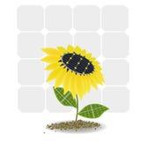 Girassol em baterias solares Foto de Stock Royalty Free