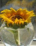 girassol em um vaso Imagens de Stock Royalty Free
