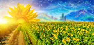 Girassol fantástico de sun no campo do verão imagens de stock