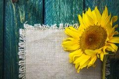 Girassol floral do vintage da flor do verão do fundo da arte Fotografia de Stock