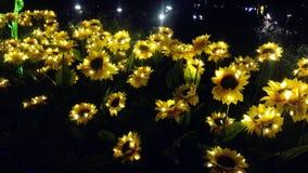 Girassol iluminado do diodo emissor de luz Foto de Stock