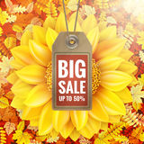 Girassol na folha do outono com etiqueta da venda Eps 10 Foto de Stock Royalty Free
