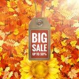 Girassol na folha do outono com etiqueta da venda Eps 10 Fotos de Stock