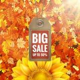 Girassol na folha do outono com etiqueta da venda Eps 10 Foto de Stock
