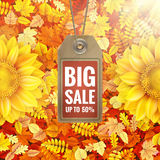 Girassol na folha do outono com etiqueta da venda Eps 10 Imagens de Stock