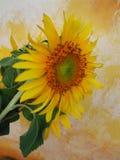 Girassol no estúdio amarelo imagens de stock