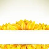 Girassol no fundo branco Eps 10 Imagens de Stock