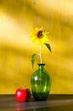 Girassol no vaso de vidro e da maçã na vida vermelha ainda Imagem de Stock