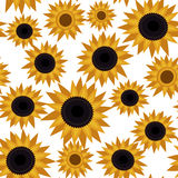 Girassol sem emenda do teste padrão de flor Foto de Stock Royalty Free