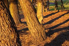 girata degli alberi di stagione di autunno Fotografie Stock Libere da Diritti
