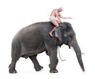 Giri allegri del mahout su un elefante Fotografia Stock