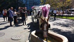 Giri in Central Park, NYC, NY, U.S.A. del trasporto e del cavallo Fotografia Stock
